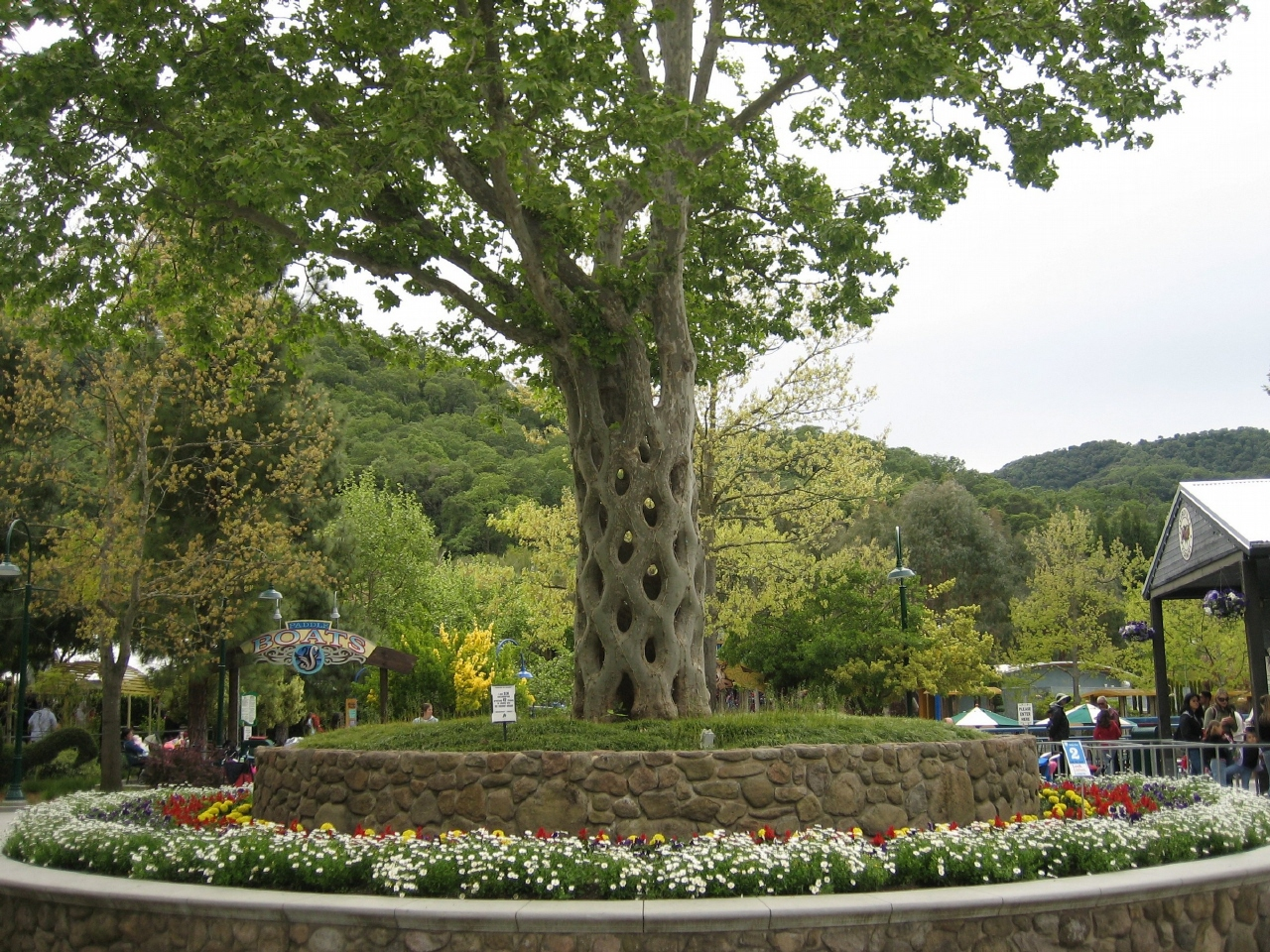 Four more unique trees to visit in america roadtrippers for Unusual trees for small gardens