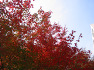 가을이 깊어갑니다..