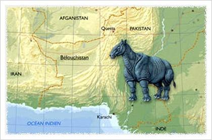 [图]地球历史上生存过的最大哺乳动物